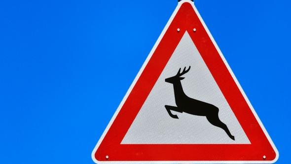 Im Herbst steigt die Zahl der Wildunfälle